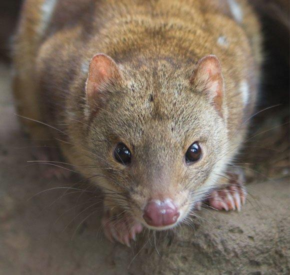 zwalczanie-szczurow